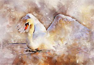 swan-painting