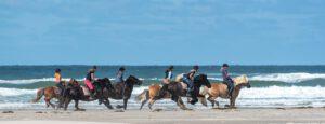 horses-fryslan