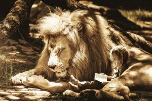 lion-kid